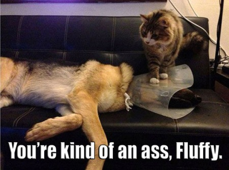 funny-pictures-cat-sitting-dogs-cone